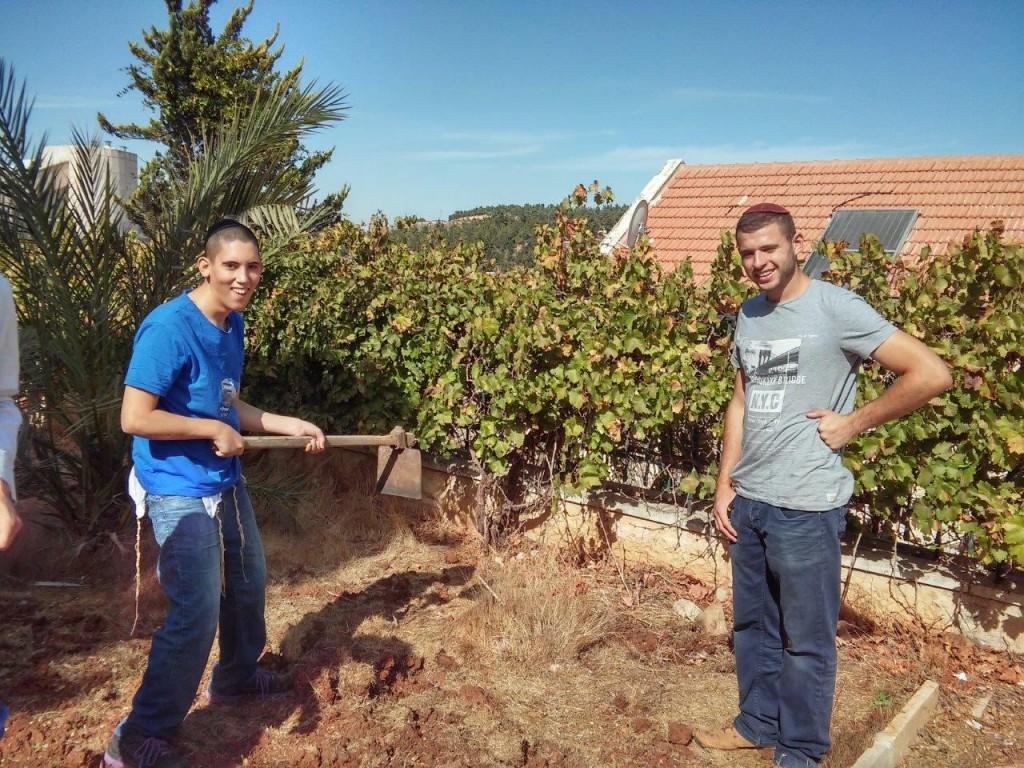 Activites around Shalvat Haim - Gardening